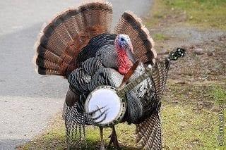 sexfist turkey
